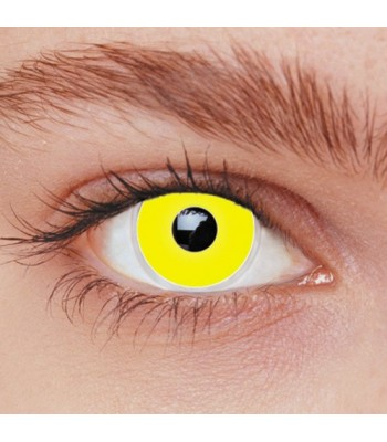 Lentilles jaunes adulte