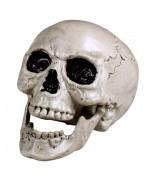 Crâne humain avec mâchoire mobile idéal pour réaliser une décoration pour Halloween
