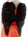 Ailes noires à plumes